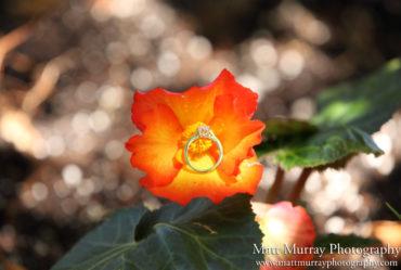 Queen Elizabeth Park Engagement Proposal Flowers