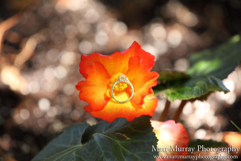 Queen Elizabeth Park Engagement Proposal Flower