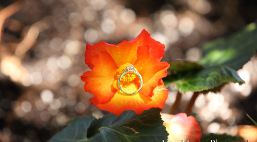 Queen Elizabeth Park Engagement Proposal Flowers   Matt